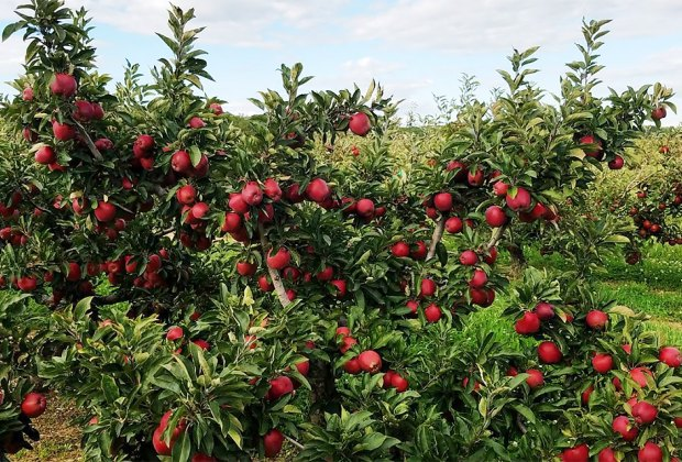 Pick your own apples and more at Lewin Farms this fall.