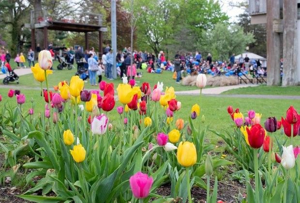 Celebrate spring at Huntington Village's annual Tulip Festival. Photo courtesy of Living Huntington