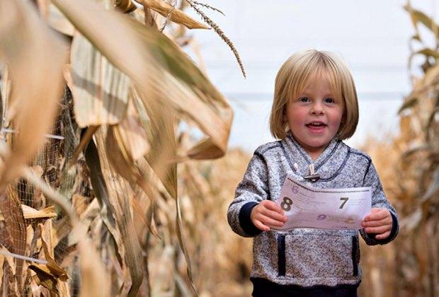 Farm fun in Lyman's corn maze. Photo Courtesy of Lyman Orchards
