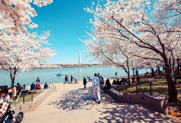 Visit DC in the spring for warm temps and maybe even cherry blossoms. Photo by m01229 via Flickr