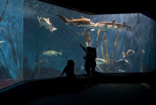 Photo courtesy of CT Tourism - The Maritime Aquarium at Norwalk