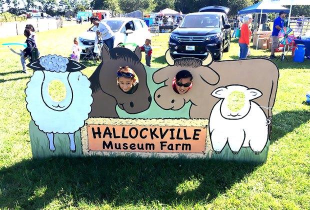 Meet sheep, llamas, alpacas, and more at the Long Island Fleece and Fiber Fair. Photo by Jaime Sumersille
