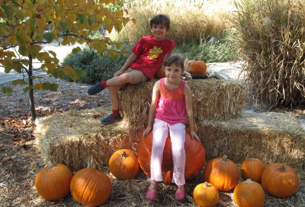 There are harvest displays in the fall and blooming flowers year round at Descanso Gardens.