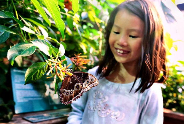 It's Butterfly and Caterpillar Weekend at the Museum of Science. Photo by Tyler Trahan courtesy of Greater Boston Convention & Visitors Bureau
