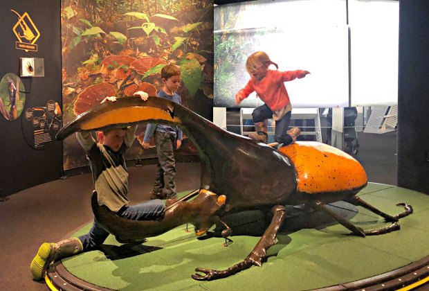 Kids get an up-close look at all the parts of the Hercules beetle. Photo courtesy of author