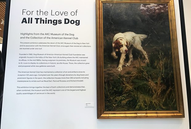 Dog lovers now have a museum to celebrate their love of dogs, Museum of the Dog.