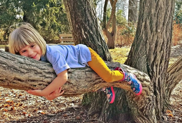 Hug a tree—it's losing its leaves! Photo courtesy of New Canaan Nature Center