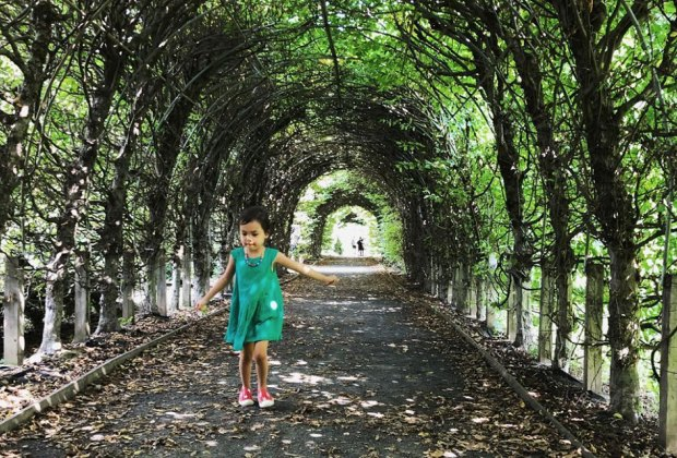 Breeze through the Allee at Snug Harbor Botanic Gardens. This beautiful tunnel of Hornbeam trees is just one stunning feature at Snug Harbor Cultural Center and Botanical Gardens, and it's the perfect place to take a stroll. Photo courtesy of Snug Harbor
