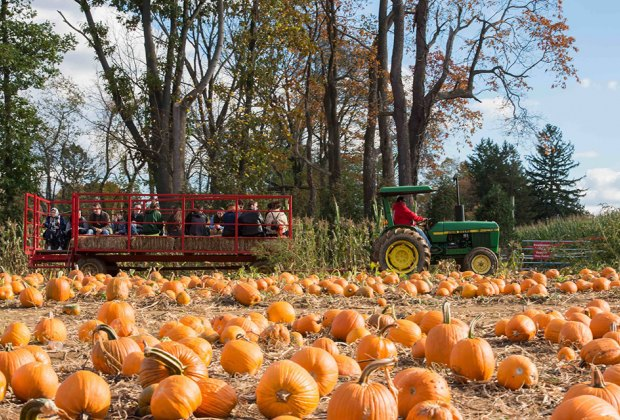Head to Stony Hills Farms this weekend for hayrides, pumpkins, a corn maze, and more fall fun! Photo courtesy of the farm