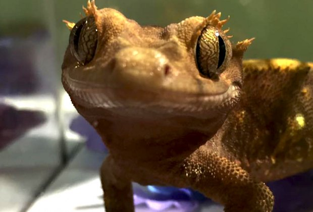 See some cute faces at the New York Metro Reptile Expo. Photo courtesy of the expo
