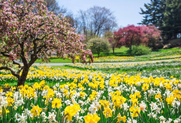 The New York Botanical Garden is an iconic living museum where kids can run free and explore. Photo courtesy of NYBG