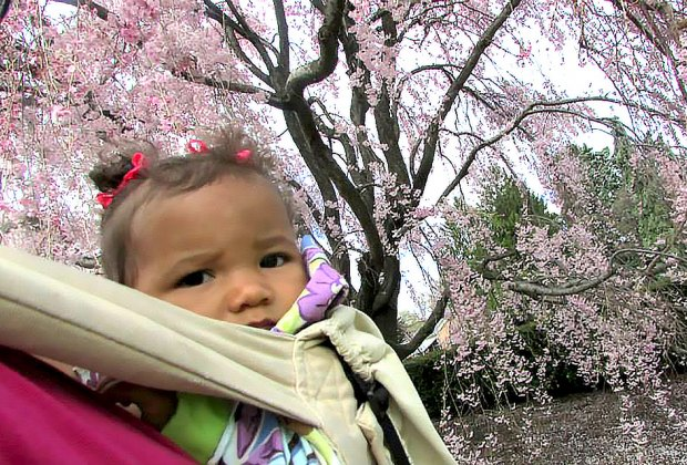 Baby under weeping cherry trees at the New York Botanical Garden