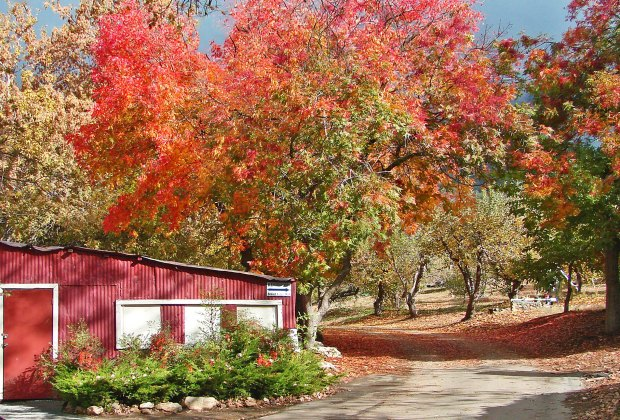Head over to the Snow-line Orchard in Oak Glen to pick apples and see fall foliage. Photo by Don Graham/Flickr