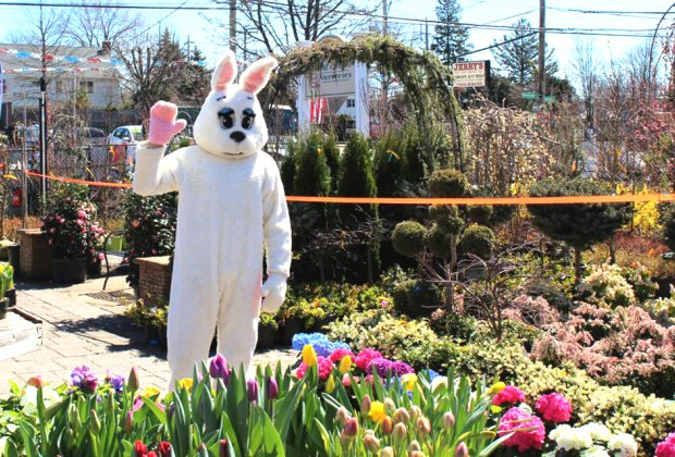 The Easter Bunny is the man of the hour at the egg hunt at Old Mills Nursery. Photo courtesy of the nursery