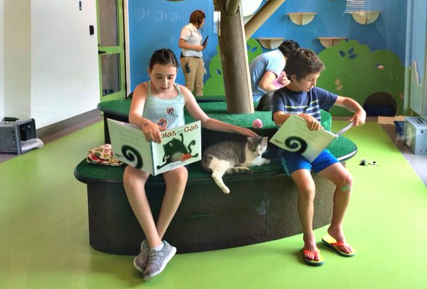 Kids reading to their furry friends at the Annenberg's Paws and Pages event. Photo courtesy of Annenberg PetSpace