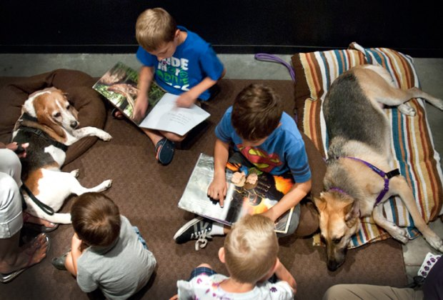 Practice reading with furry friends during the P.A.W.S. Reading Program./Photo courtesy of the Houston Museum of Natural Science.