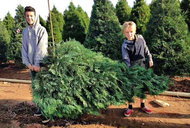 Cut Your Own Christmas Tree This Year: Southern California ...