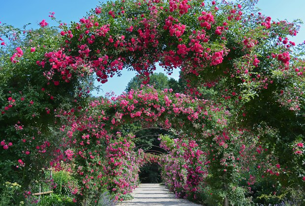 flower tunnel at Planting Fields Arboretum State Historic Park