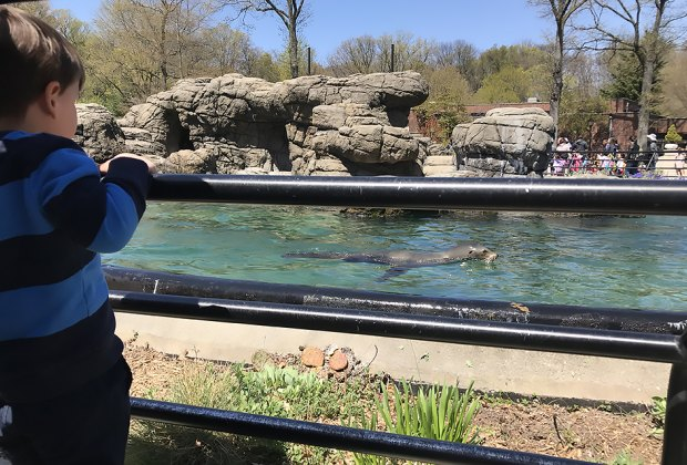 Visit the Sea Lions at the Prospect Park Zoo