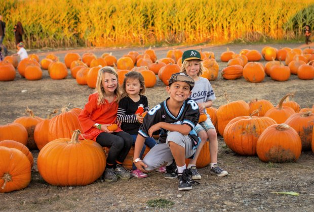 Cute kids and pumpkins naturally go together, don't they?