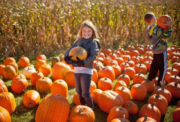 Pumpkins galore—which shape do you want this year? Photo courtesy of Massachusetts Office of Travel & Tourism