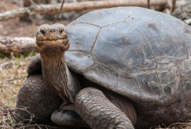 Reptile Round Up! Photo courtesy of California Museum of Art Thousand Oaks