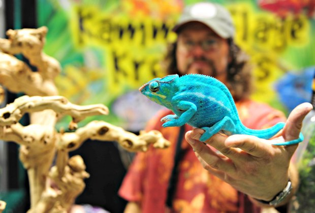 Photo courtesy of Reptile Super Show