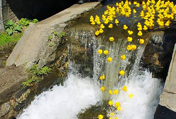 Cheer on the rubber ducks at the 12th Annual Ducky Derby on Saturday! Photo by Susan Miele