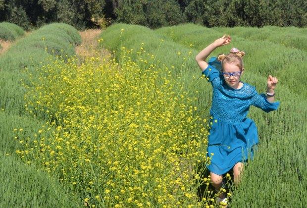 Run through the lavender fields at 123 Farm.