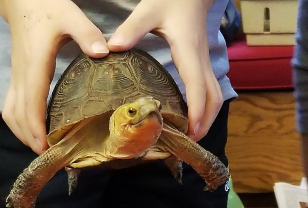 Meet a variety of critters at Rye Nature Center's Daddy and Me Animal Show. Photo courtesy of the center