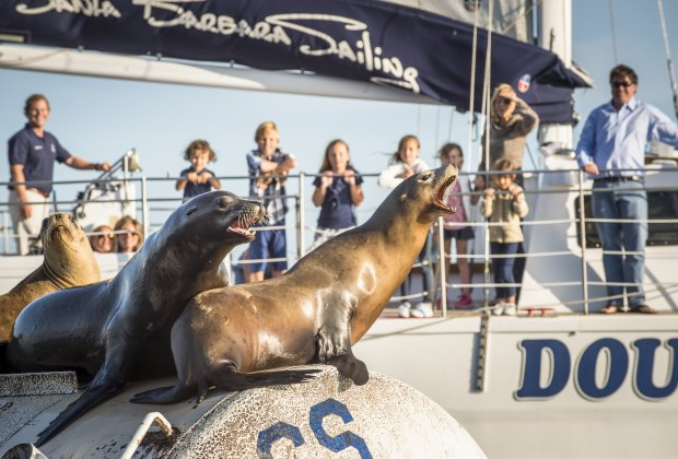 Take a harbor cruise and meet the locals. Photo courtesy of Santa Barbara Sailing