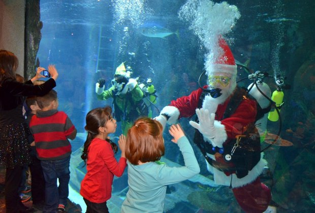 Catch a swimming Santa at the Downtown Aquarium's breakfast with the big guy./Photo courtesy of Downtown Aquarium.