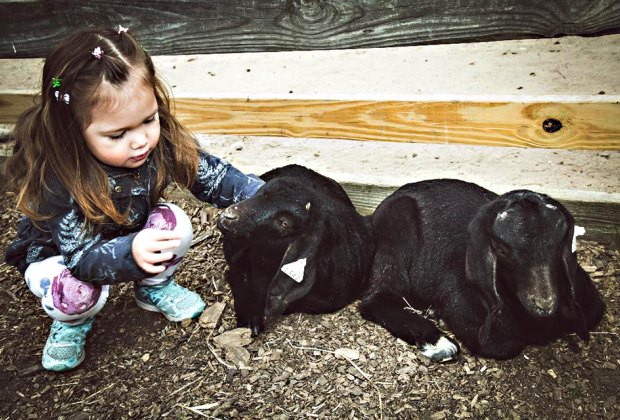 Spend time with the baby animals at the Suffolk County Farm and Education Center.