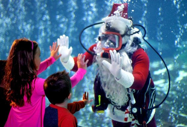 Scuba Santa returns to Adventure Aquarium!