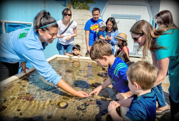 Meet a few sea creatures at the Sea Lab. Photo courtesy of Redondo Beach Chamber of Commerce & Visitors Bureau