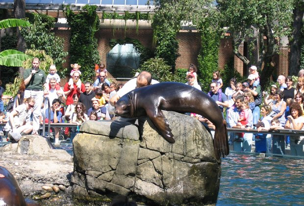 The Central Park Zoo sea lions never disappoint. Photo by Joy Kaufman via Flickr