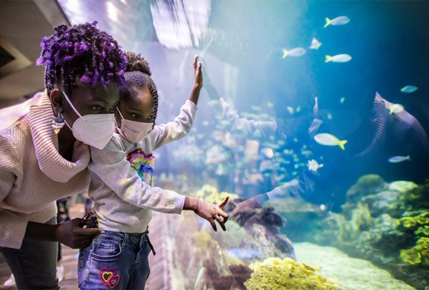 Things To Do on Mother's Day in Chicago: Shedd Aquarium