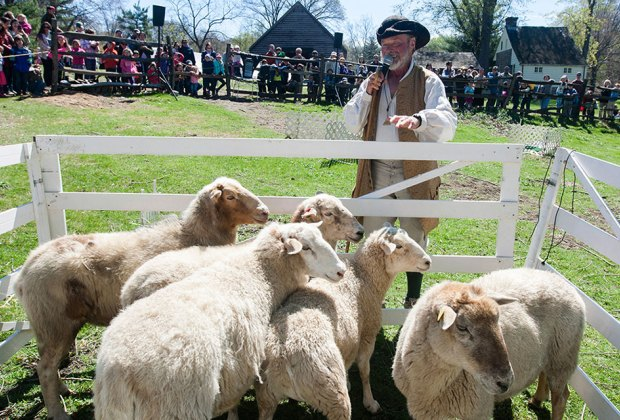 Sheep-to-Shawl celebrates all things woolly! Photo courtesy of Historic Hudson Valley