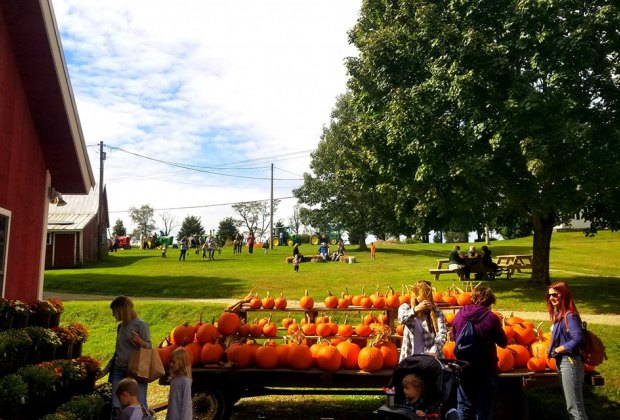 The annual Soukup Harvest Festival has now grown to two weekends. Photo courtesy of the farm