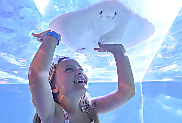 SeaQuest will offer hands-on experiences with sea life and other animals.