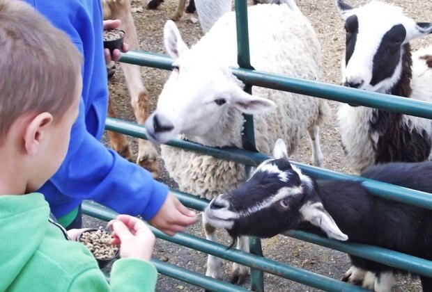 The Stirling Street Fair is known for its amazing petting zoo. Photo courtesy of the event