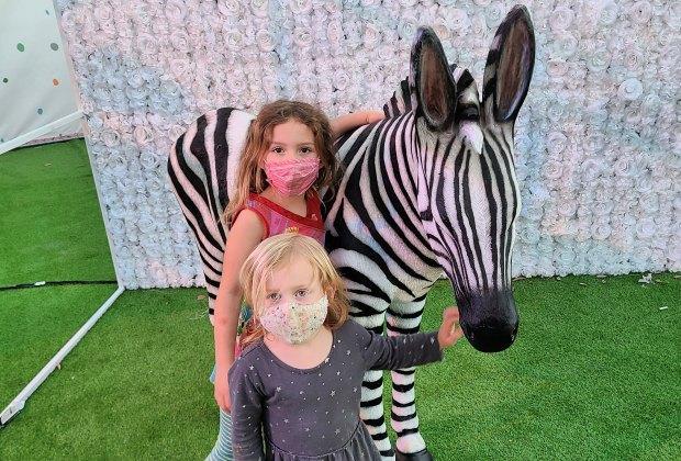 A Real Life Candy Land at Sugar Rush:Hello zebra