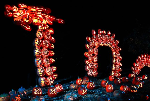 The brilliant jack-o'-lantern serpent is just one of the many spectacular sights at the Great Jack O'Lantern Blaze. Photo by Susan Miele