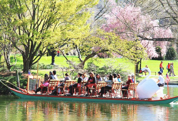 Spring brings the budding trees and the swan boats!