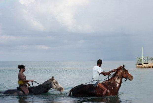 Horseback swimming in Jamaica