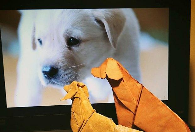 Taro's Origami offers online classes