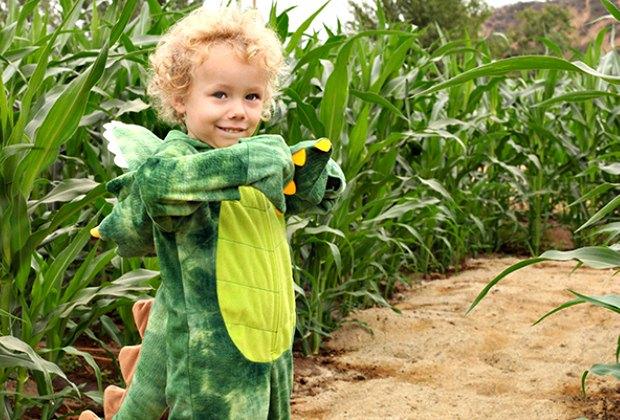 Little dinosaurs like corn mazes, too.
