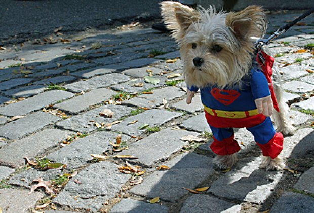 Thereu0027s nothing cuter than seeing little kids decked out in cool costumes...except perhaps dogs done up in fancy duds. Before I became a mom ... & Halloween Goes to the Dogs: NYC Dog Costume Parades u0026 Contests ...