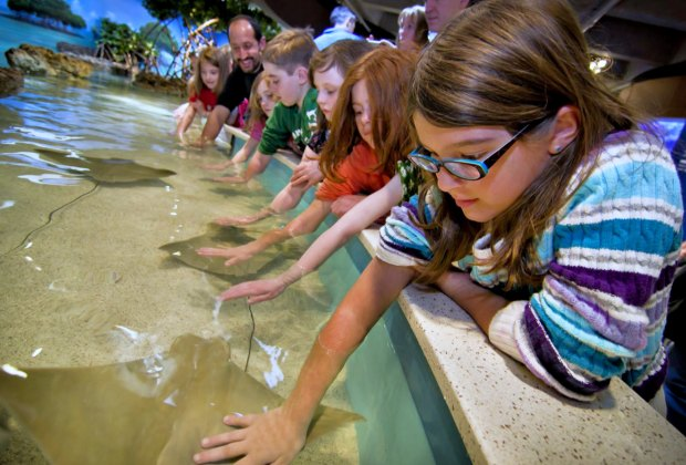 Kids touch the gentle rays at the Touch Tank Exhibit. Photo courtesy of New England Aquarium