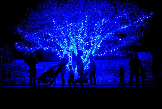 There are warming fires and children's music along with beautiful light displays at Tower Hill Botanical Garden. Photo courtesy of the garden